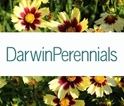 Darwin Perennials -- Bare Root, Liners, Unrooted Cuttings