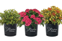 Greenleaf Nursery: The Garden Debut® Collection